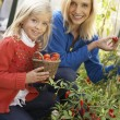 Young woman with child harvesting tomatoes — Stock Photo #11878946