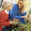 Young woman with child harvesting tomatoes — Stock Photo
