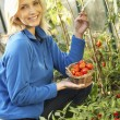 Young woman harvesting tomatoes — Stock Photo #11878958