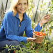 Young woman harvesting tomatoes — Stock Photo #11878962