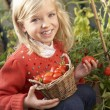 Young child harvesting tomatoes — Stock Photo #11878970