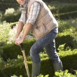 Young man working in garden — Stock Photo #11878971