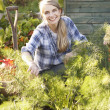 Stock Photo: Woman working on allotment