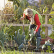 Woman working on allotment — Stock Photo #11884791