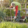 Woman working on allotment - Stock Photo