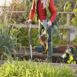 Woman working on allotment — Stock Photo #11884796