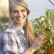 Woman working in greenhouse — Stock Photo