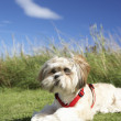 Small dog sitting on grass - Stock Photo