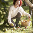 Stock Photo: Womcollecting apples off ground