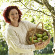 Woman picking apples in garden — Stock Photo