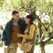 Couple picking apples in garden — Stock Photo