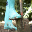 Stock Photo: Person digging in garden