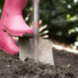 Woman digging in garden — Stock Photo #11887001
