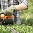 Man trimming hedge — Stock Photo #11887089