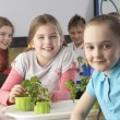 Foto de Stock  : Children learning about plants in school class