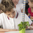 Boy learning about plants in school class - Stock Photo
