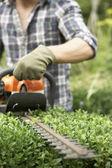 Man trimming hedge — Stock Photo