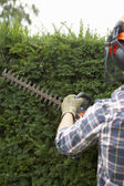 Man trimming hedge — 图库照片