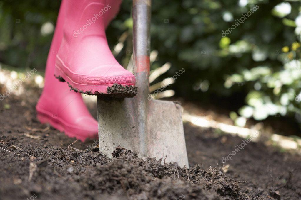 Что сажать осенью на даче для обогащения почвы 59