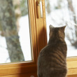 Cat Sitting On Window Ledge Looking At Snowy View — Stock Photo #11891149