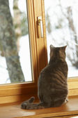 Cat Sitting On Window Ledge Looking At Snowy View — Stock Photo