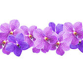 Purple orchids ( Vanda ) — Stock Photo