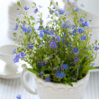 Blue wild flowers — Stock Photo