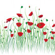 Poppy background - Stock Vector