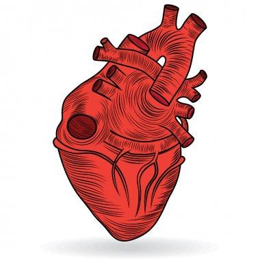 Vector button or icon of a human heart