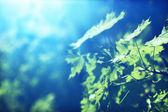 艺术背景叶子 — 图库照片