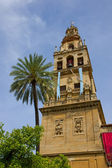 Bell tower of cathedral, Cordoba, Spain — Stock Photo
