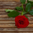Stock Photo: Perfect red rose