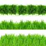 Green grass border — Stock Photo #11786381