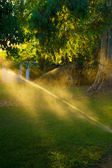 Watering the grass — Stock Photo