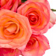 Border of fresh  pink  roses — Stock Photo