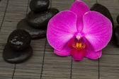 Zen kamienie i orchidea — Zdjęcie stockowe