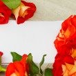 Roses and blank card — Stock Photo