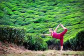 Yoga in tea plantations — Stock Photo