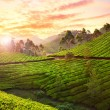 Постер, плакат: Tea plantation in Munnar