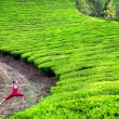 Royalty-Free Stock Photo: Yoga warrior pose in tea plantations