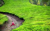 Yoga warrior pose in tea plantations — Stock Photo
