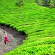 Yoga in tea plantations - Stock Photo