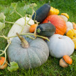 图库照片: Pumpkins and marrows crop