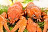 Lobsters with salad — Stock Photo