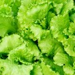 Fresh salad lettuce background — Stock Photo