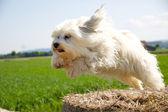 Flying dog — Stock Photo