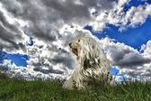 Dog before threatening clouds scenery — Stock Photo
