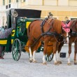 Horses for hire in Vienna — Stock Photo
