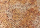 Pila di tronchi di legno — Foto Stock