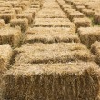 Straw bales in row — Foto Stock